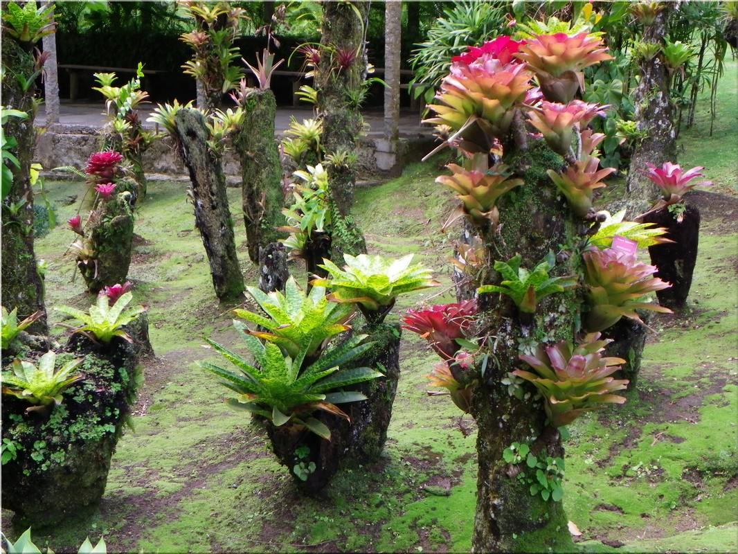 Martinique jardin de balata for Le jardin des epilobes