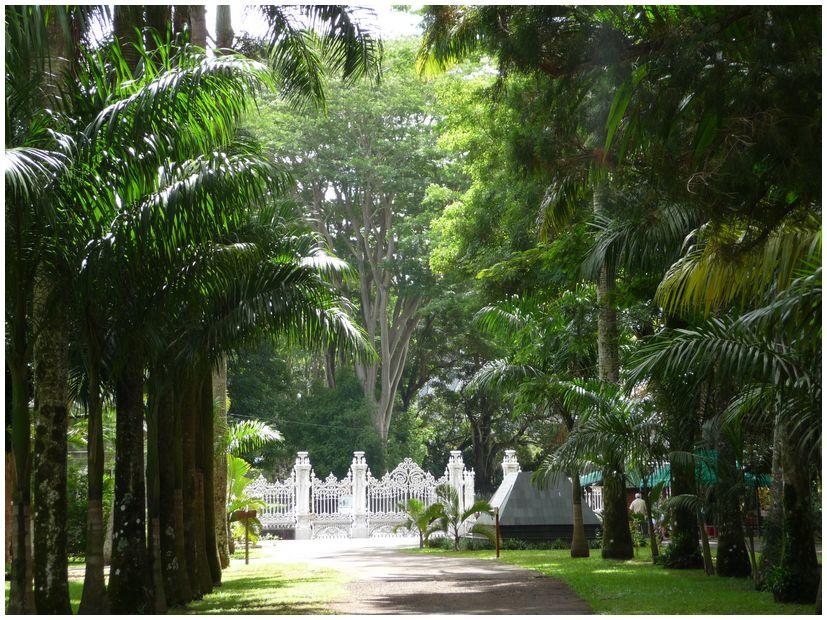 Ile maurice jardin de pamplemousse for Au jardin du gouverneur