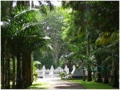 Ile maurice jardin de pamplemousse for Au jardin les amis singapore botanic gardens